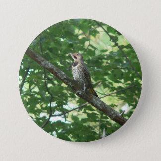 Northern Flicker in Tree Pinback Button