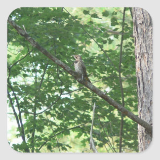 Northern Flicker in Tree Square Stickers