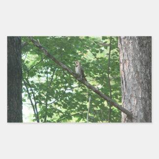 Northern Flicker in Tree Rectangular Stickers