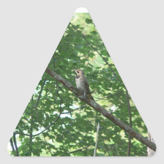 Northern Flicker in Tree Triangle Stickers