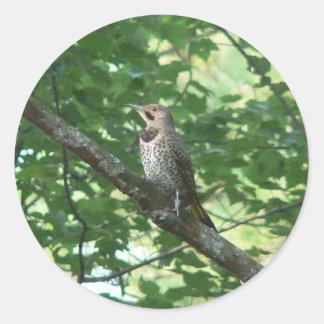 Northern Flicker in Tree Round Sticker