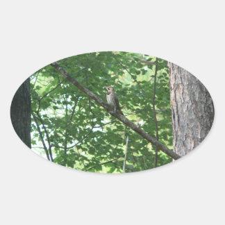 Northern Flicker in Tree Sticker
