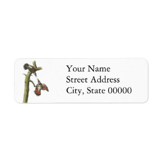 Northern Flicker, John Audubon Custom Return Address Labels