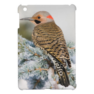 Northern Flicker male Case For The iPad Mini