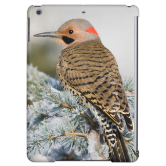 Northern Flicker male Cover For iPad Air