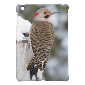 Northern Flicker male in winter Cover For The iPad Mini
