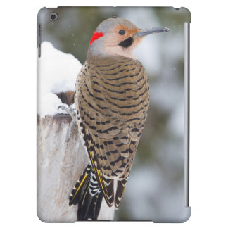 Northern Flicker male in winter iPad Air Case