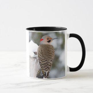 Northern Flicker male in winter Mug