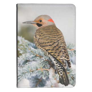 Northern Flicker male Kindle 4 Case