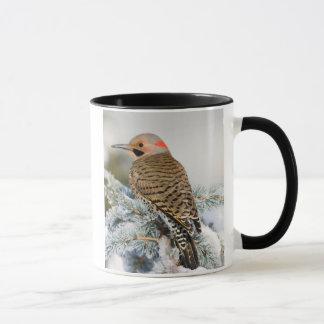 Northern Flicker male Mug