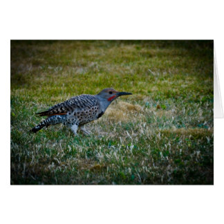 Northern Flicker on a lawn Card