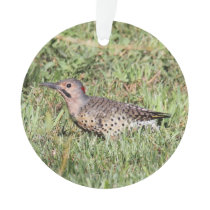 Northern Flicker Ornament