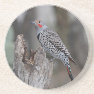 Northern Flicker Sandstone Coaster
