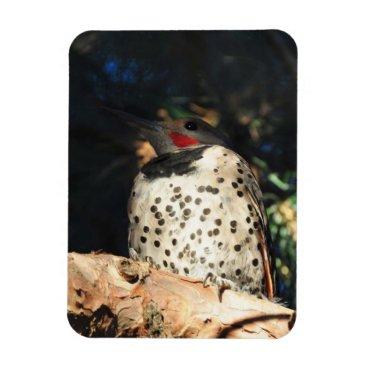 Art Themed Northern Flicker - Spots Magnet