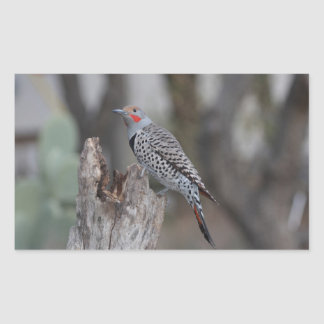 Northern Flicker Rectangle Stickers