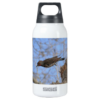 Northern Flicker Take Off Insulated Water Bottle