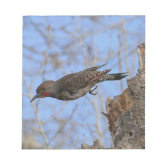Northern Flicker Take Off Notepad