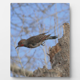 Northern Flicker Take Off Plaque