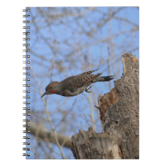 Northern Flicker Take Off Spiral Notebook