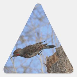 Northern Flicker Take Off Triangle Sticker