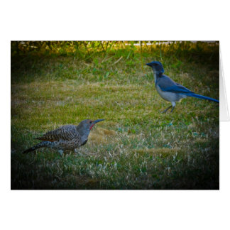 Northern Flicker & Western Scrub-Jay Card