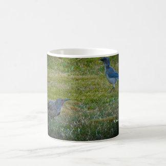 Northern Flicker & Western Scrub-Jay Coffee Mug