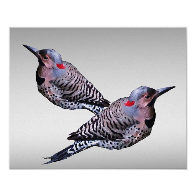 Northern Flicker Woodpecker Bird Poster