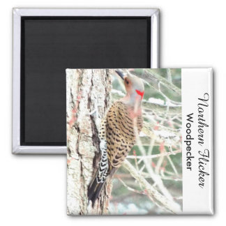 Northern flicker woodpecker magnet
