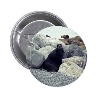 Northern fur seal Bogoslof Island Pinback Button