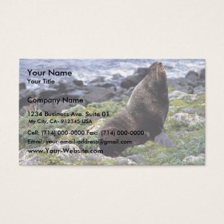 Northern fur seal business card