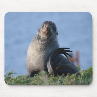 Northern Fur Seal Mouse Pad