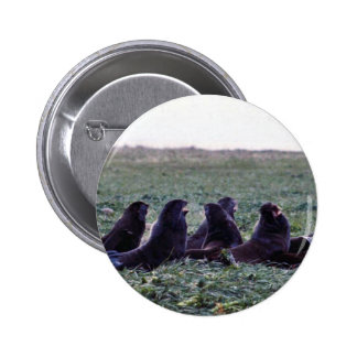Northern fur seals buttons
