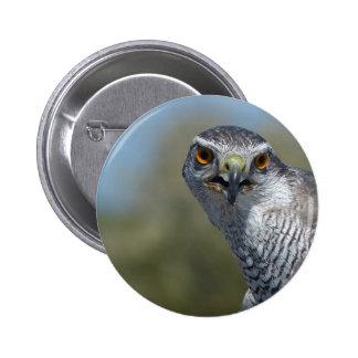 Northern Gohawk Close Up Button