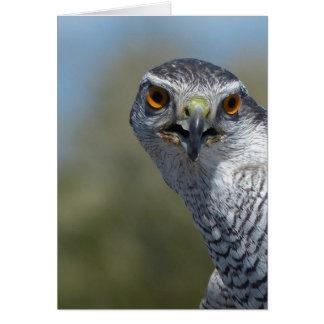 Northern Gohawk Close Up Card