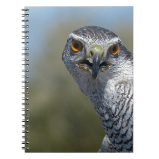 Northern Gohawk Close Up Notebook