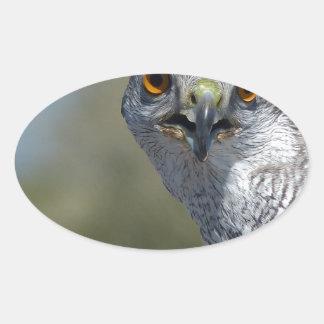 Northern Gohawk Close Up Oval Sticker