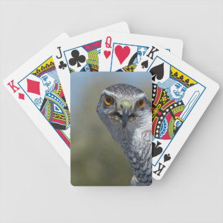 Northern Gohawk Close Up Bicycle Playing Cards
