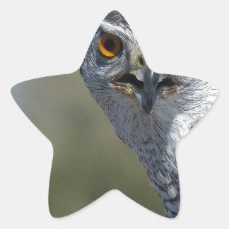 Northern Gohawk Close Up Star Sticker