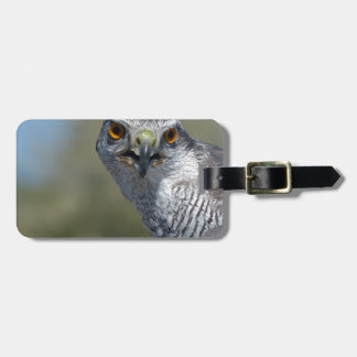 Northern Gohawk Close Up Tag For Luggage