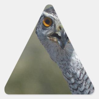 Northern Gohawk Close Up Triangle Sticker