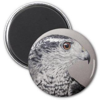 Northern Goshawk Magnet