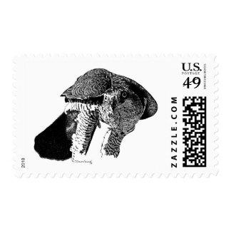 Northern Goshawk Postage Stamp