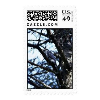 Northern goshawk stamp