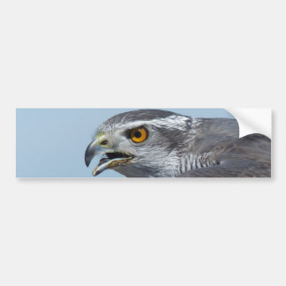 Northern Goshawk Screeching Bumper Sticker