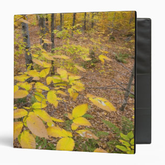 Northern hardwood forest in New Hampshire USA Binders