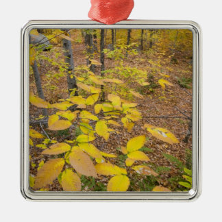 Northern hardwood forest in New Hampshire USA Metal Ornament