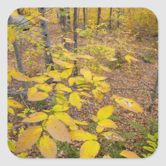 Northern hardwood forest in New Hampshire USA Stickers