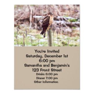 "Northern Harrier Hawk on Fence 4.25"" X 5.5"" Invitation Card"