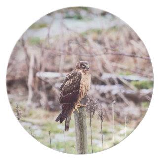 Northern Harrier Hawk on Fence Melamine Plate