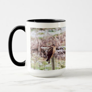 Northern Harrier Hawk on Fence Mug